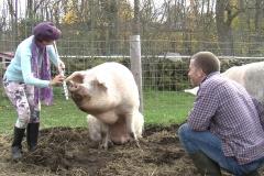 HEE pig 2