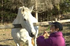 WW white horse 3