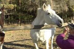 WW white horse